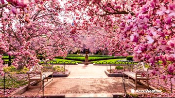 National Cherry Blossom Festival March 20-April 14