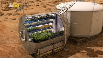 Spicy in Space! NASA Plans to Grow the First Peppers in Space