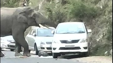 Breaking and Entering ! This Hungry, Hungry Elephant May Have Broken the Law