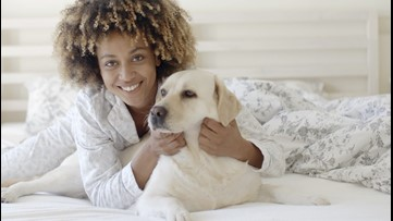 Dog Dozing! Should You Let Your Dog Sleep in Your Bed?