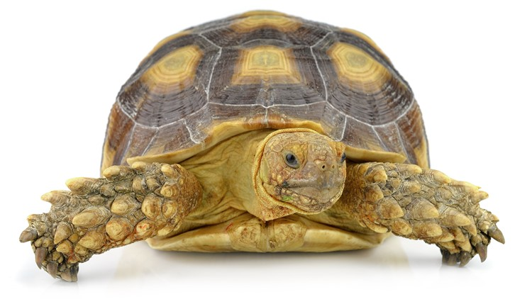 Passenger survives being hit in the head by flying turtle
