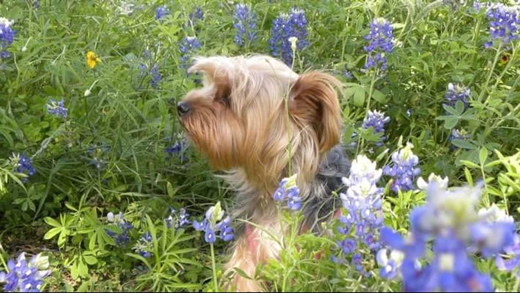 Wildflower guide: The best Insta-worthy spots in Texas to pose for selfies