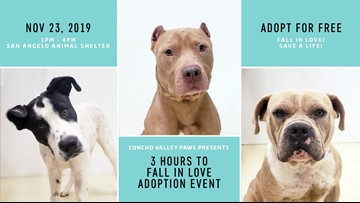 San Angelo's animal shelter is full - free adoptions available Saturday afternoon
