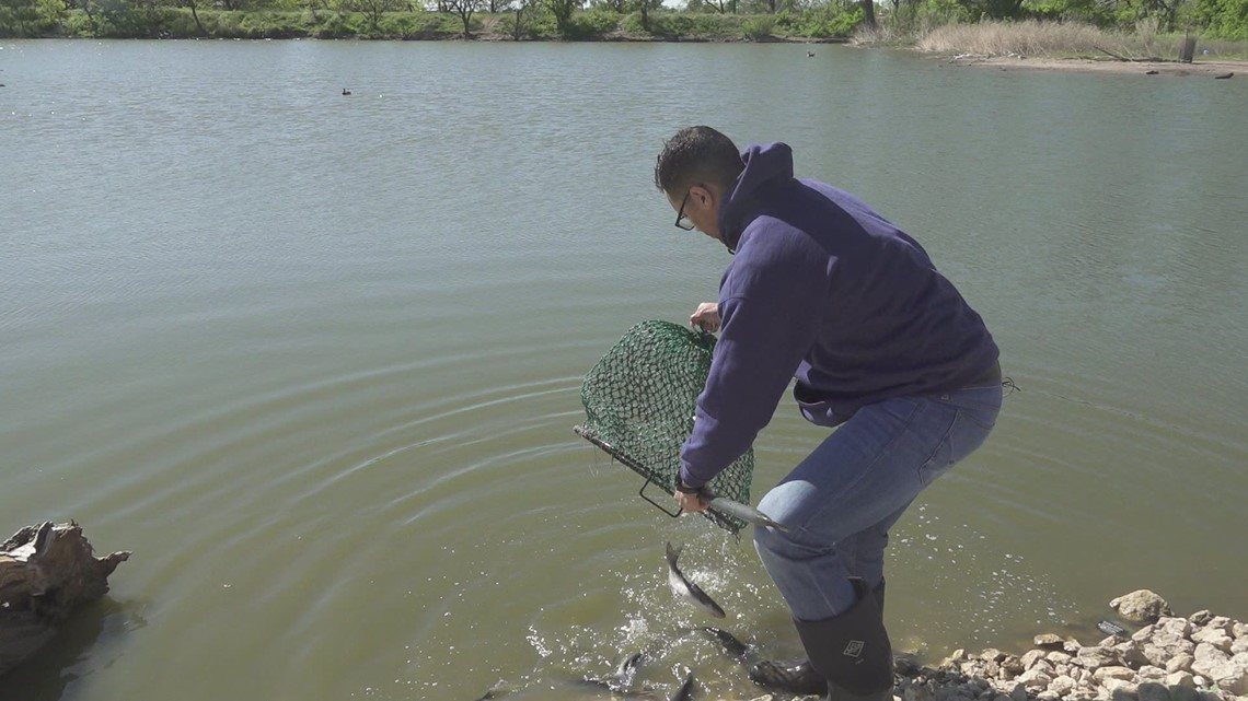Channel catfish stocking at Grover Nelson Park