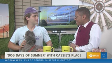 Cassie's Place to host 'Dog Days of Summer' fundraiser