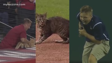 "A game interrupting feline goes on to the field during the Dallas Cowboys game at the ""purr""-fect time"