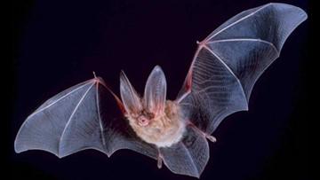 Bats shouldn't be feared, rather appreciated