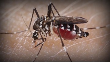 Abilene health officials offering free larvicide tablets to curb mosquito population