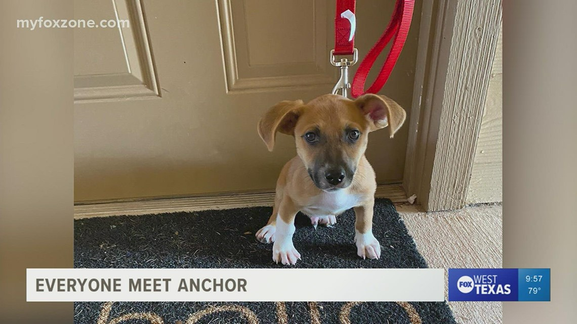 Anchor is the newest member of the FOX family