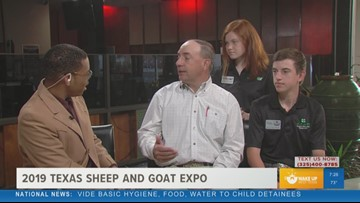 Learn more about livestock at the 2019 Texas Sheep and Goat Expo