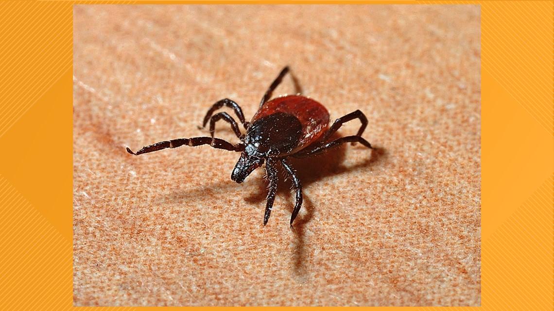 As summer approaches, be aware of tick season
