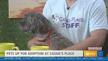 How to adopt Sophie and other animals at Cassie's Place