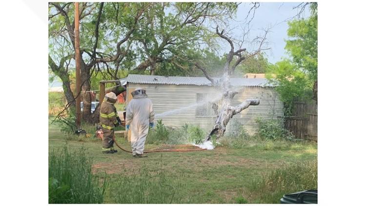 Bee swarm kills one, injures another near Breckenridge