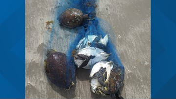 Texas Game Wardens offer reward for information regarding six killed green sea turtles