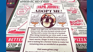 Gulf Coast Humane Society teaming with local Papa John's Pizza for pawsome idea to spread awareness about pet adoptions