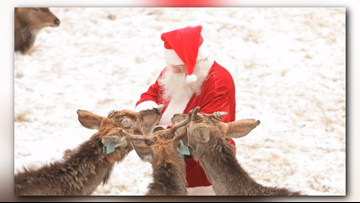CLEARED FOR TAKEOFF: Santa Claus' official veterinarian OKs reindeer for iconic flight