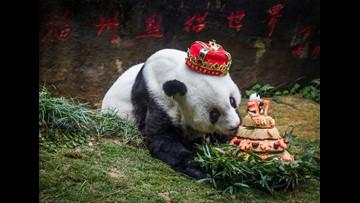 World's oldest panda dies in China