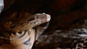 Over 150 Snakes are Removed from a Colorado Couple's Home