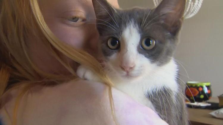 Kitten takes 300-mile week-long joyride under car from Louisiana to Texas