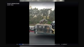 Outrage pours over video showing dog chained to top of cage on I-95