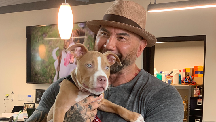 Marvel actor David Bautista adopts neglected dog now named 'Penny' from Humane Society of Tampa Bay